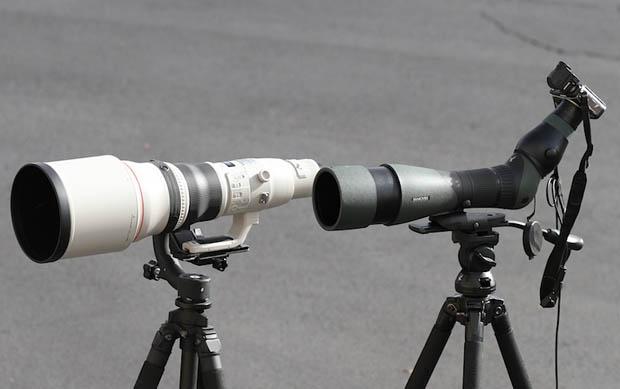 Telescopes Vs. Spotting Scopes